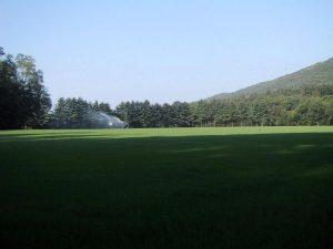 Prato precoltivato in produzione nei nostri vivai di Sesto Calende - VA -