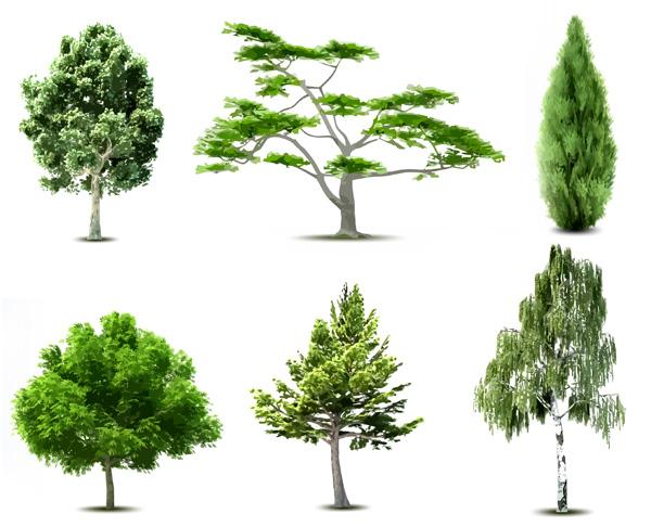 potatura-alberi-pratomax3